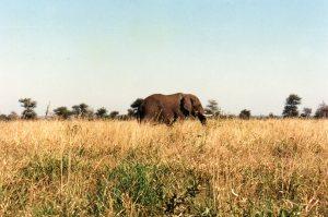 Passing Elephant