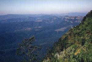 Wonder View