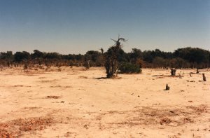 Denuded landscapes - deep in the dry season, soil gone, trees stripped of wood by goats and for firewood