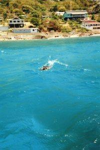 Mervin in the water