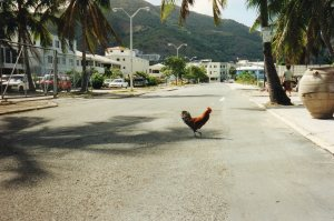 Why did the Chicken Cross the Road - because it lived in the Caribbean
