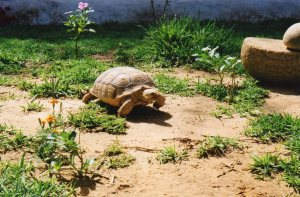 Tea time, but not for the tortoises