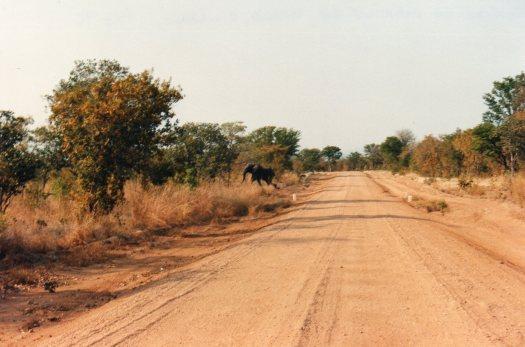 Insect Safari - Scorpions again